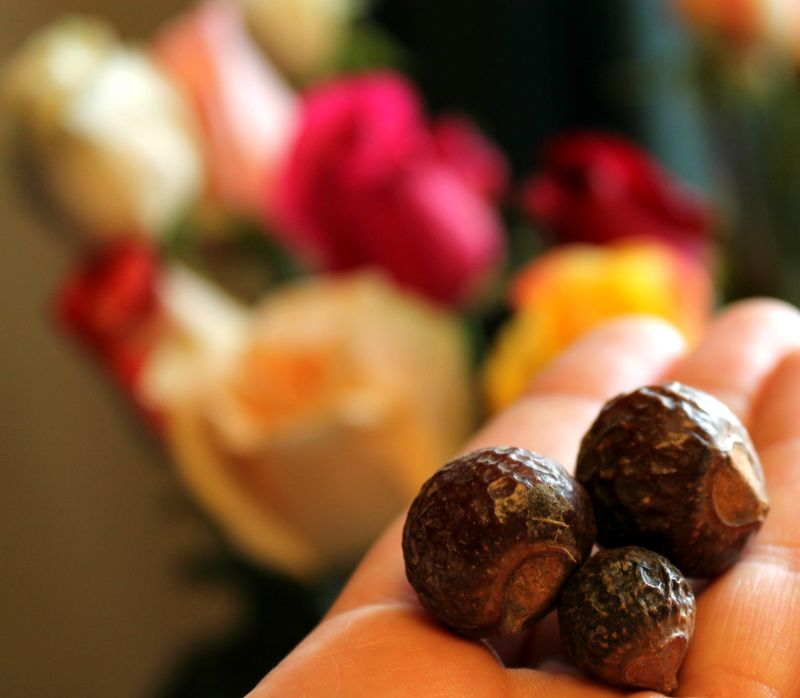 Close up soap nuts